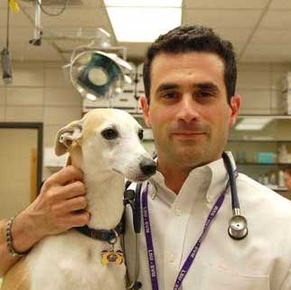 Dr. Mark Acierno with a Greyhound