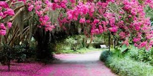 Pink Flowers in Charleston